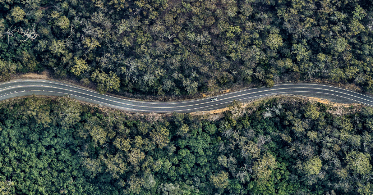 Bird's eye view of winding forest road